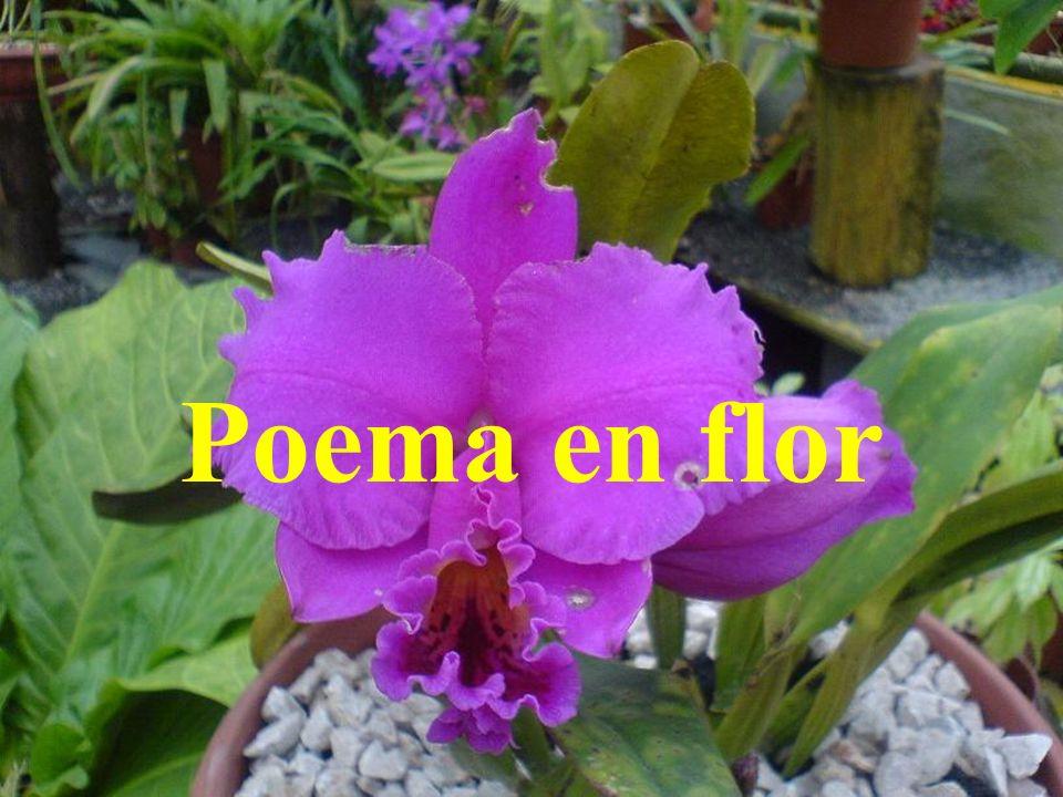 Poema en flor