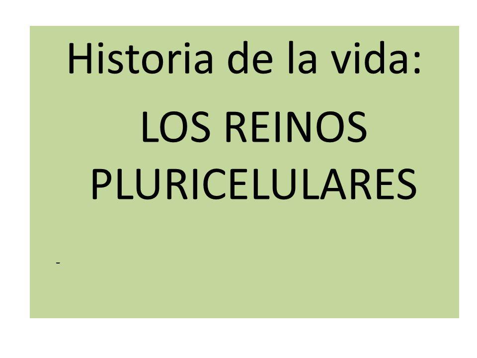 LOS REINOS PLURICELULARES