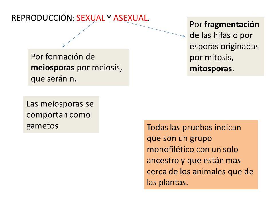 REPRODUCCIÓN: SEXUAL Y ASEXUAL.