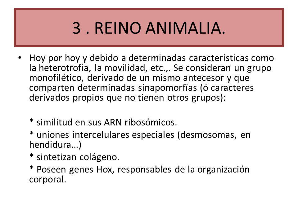 3 . REINO ANIMALIA.