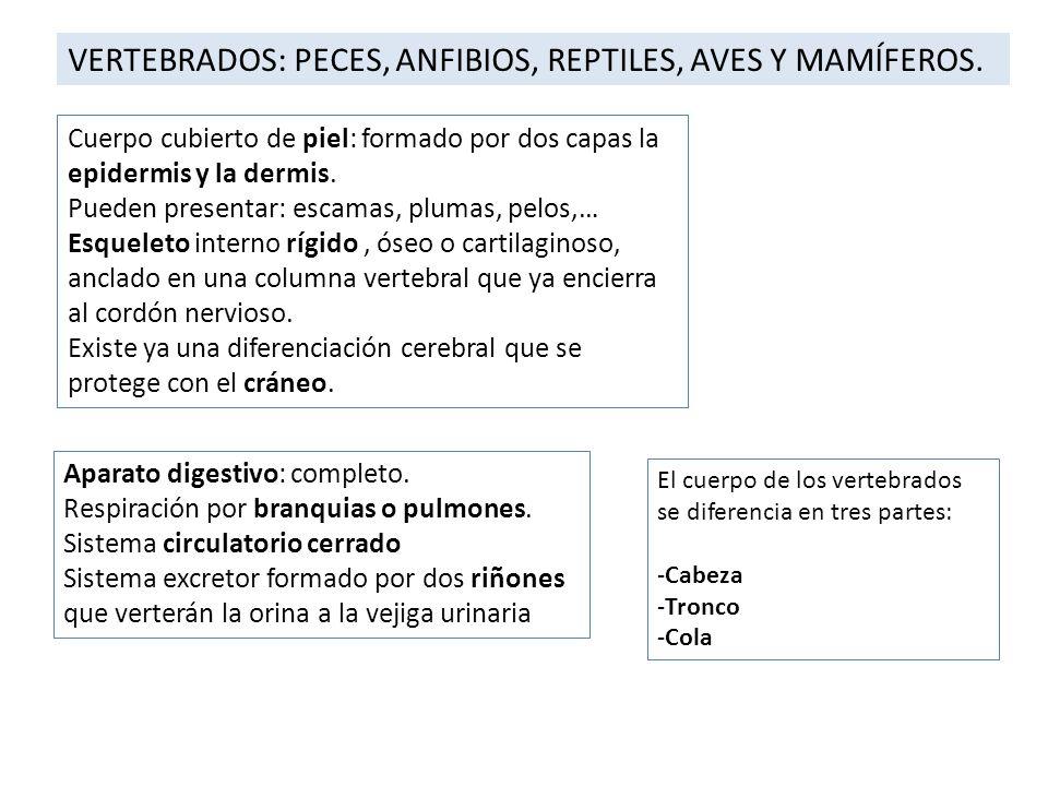 VERTEBRADOS: PECES, ANFIBIOS, REPTILES, AVES Y MAMÍFEROS.