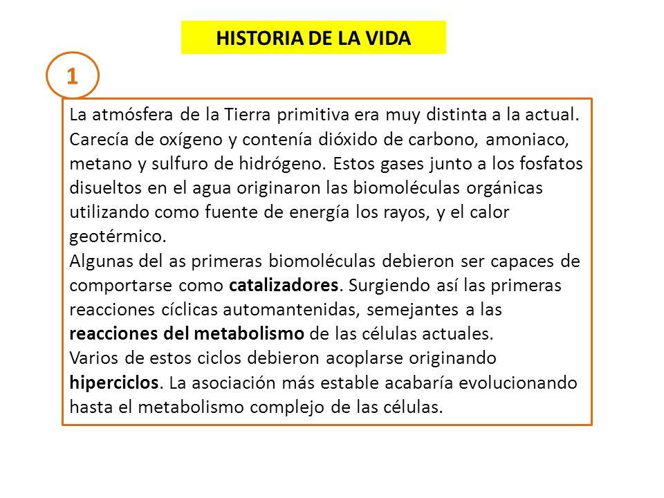 HISTORIA DE LA VIDA 1.