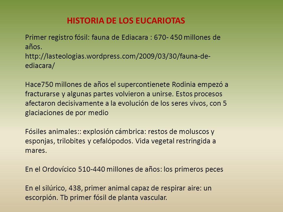 HISTORIA DE LOS EUCARIOTAS