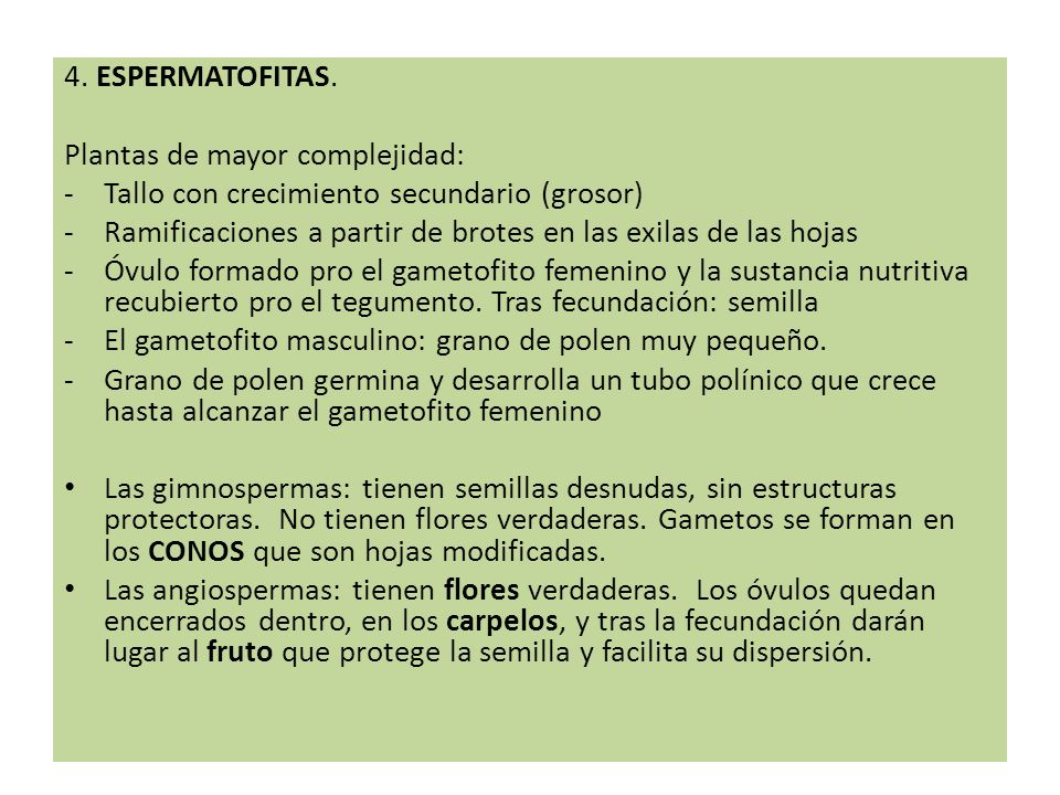 4. ESPERMATOFITAS. Plantas de mayor complejidad: Tallo con crecimiento secundario (grosor)