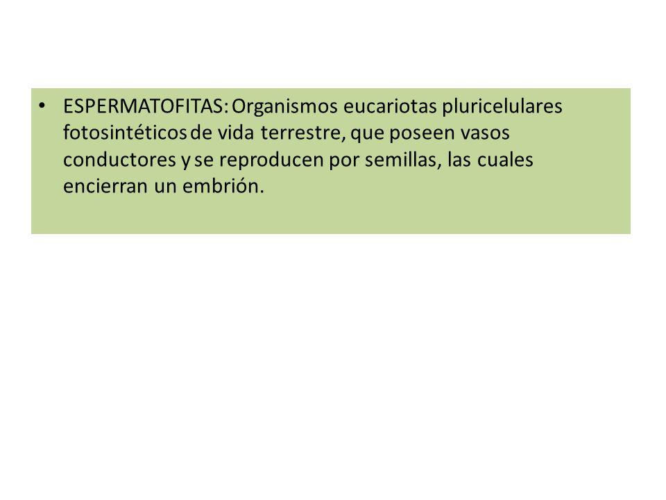 ESPERMATOFITAS: Organismos eucariotas pluricelulares fotosintéticos de vida terrestre, que poseen vasos conductores y se reproducen por semillas, las cuales encierran un embrión.