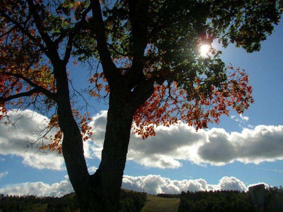 LOS PLANOS DE LA NATURALEZA:UN PUNTO DE VISTA ALTERNATIVO
