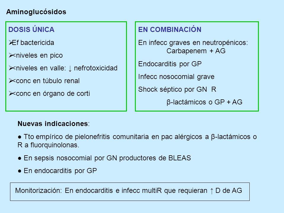 Aminoglucósidos DOSIS ÚNICA. Ef bactericida. <niveles en pico. <niveles en valle: ↓ nefrotoxicidad.