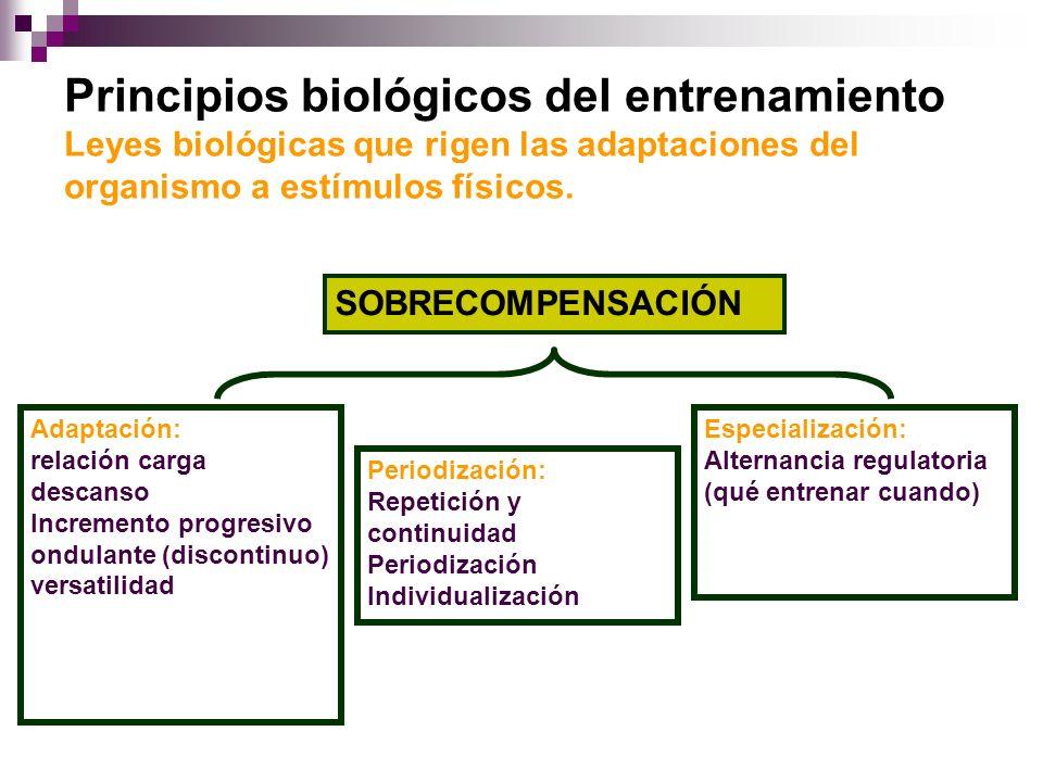 Principios biológicos del entrenamiento Leyes biológicas que rigen las adaptaciones del organismo a estímulos físicos.