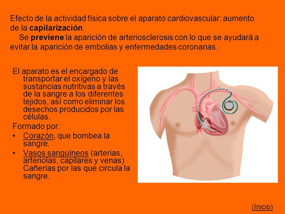 Efecto de la actividad física sobre el aparato cardiovascular: aumento