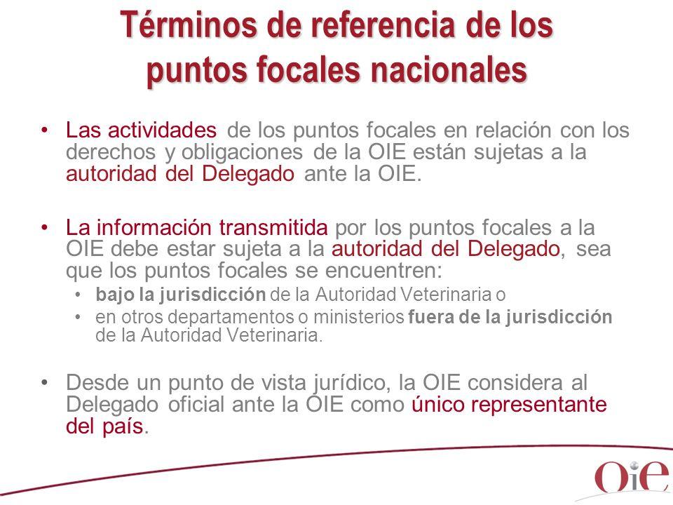 Términos de referencia de los puntos focales nacionales