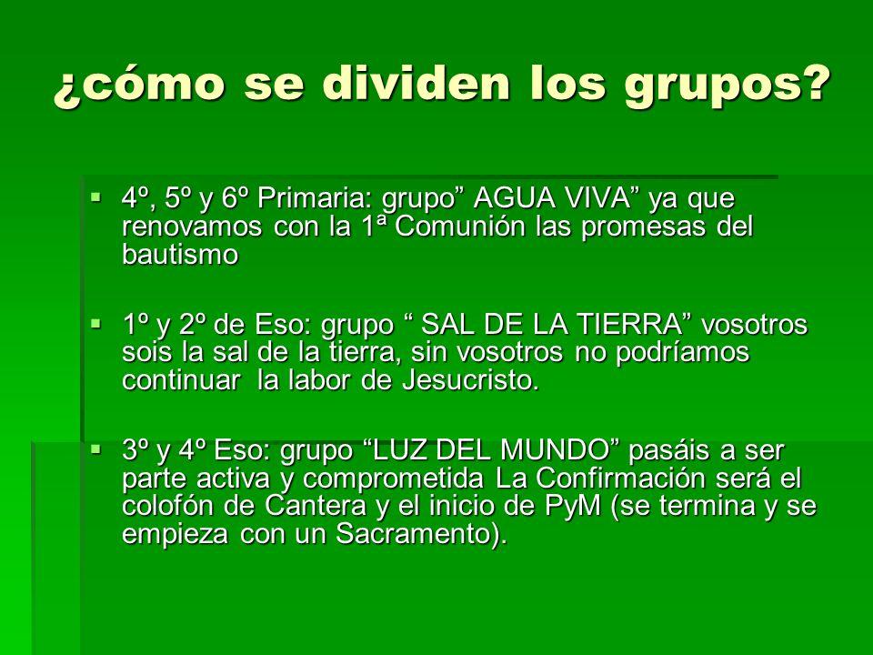 ¿cómo se dividen los grupos