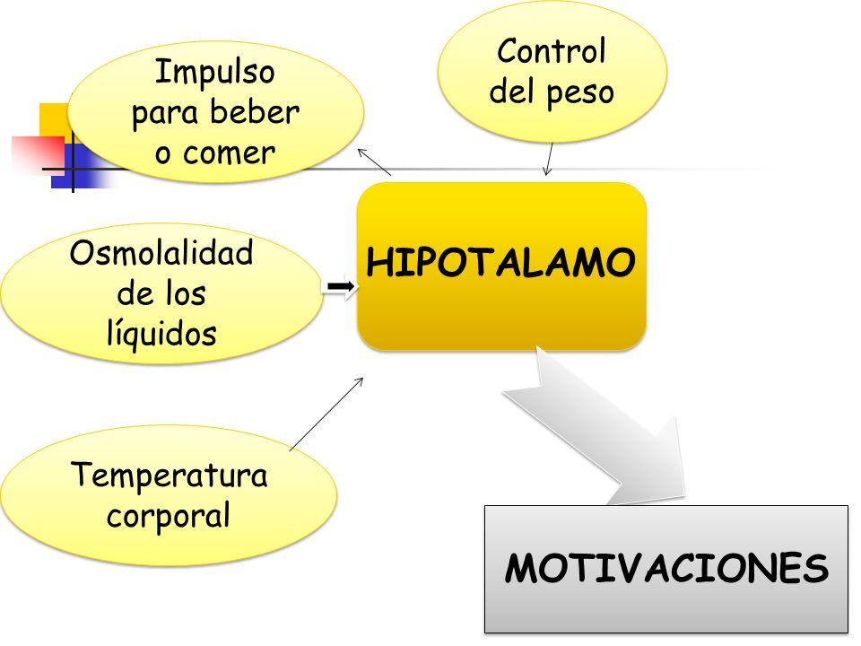 HIPOTALAMO MOTIVACIONES Control del peso Impulso para beber o comer