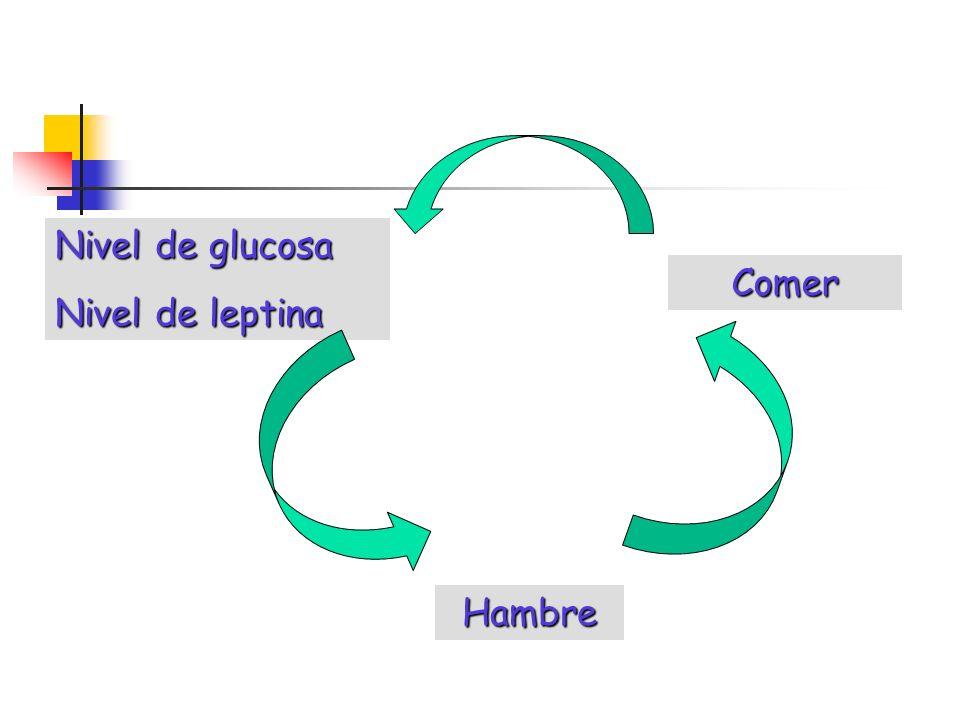 Nivel de glucosa Nivel de leptina Comer Hambre