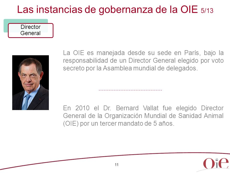 Las instancias de gobernanza de la OIE 5/13