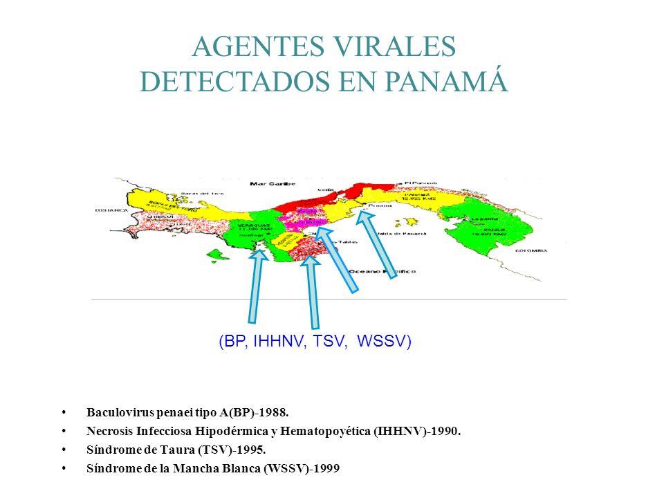 AGENTES VIRALES DETECTADOS EN PANAMÁ