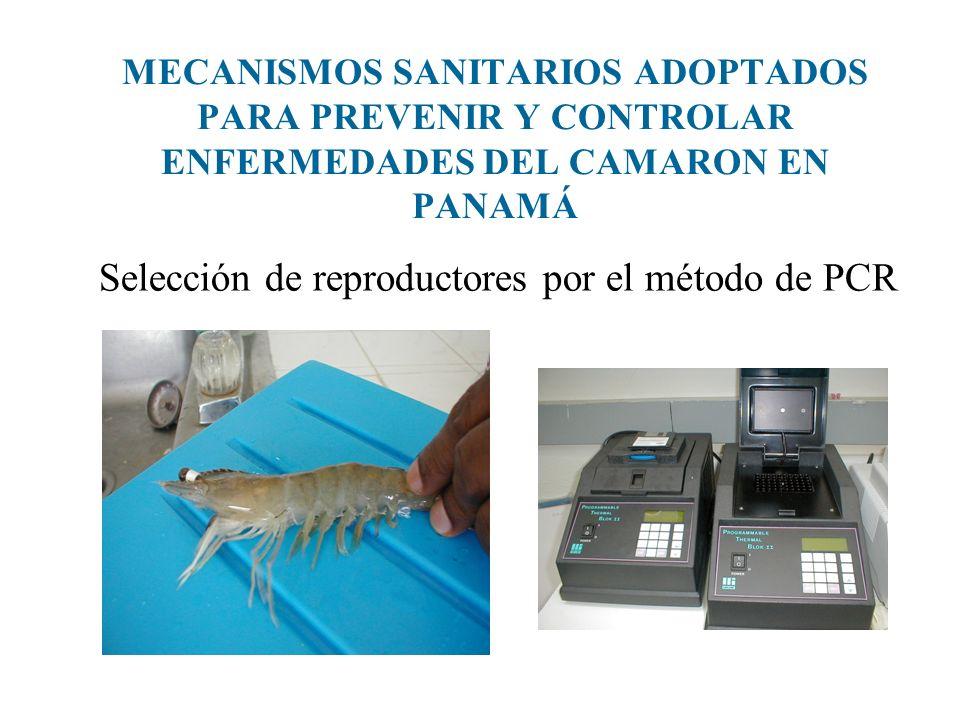 Selección de reproductores por el método de PCR