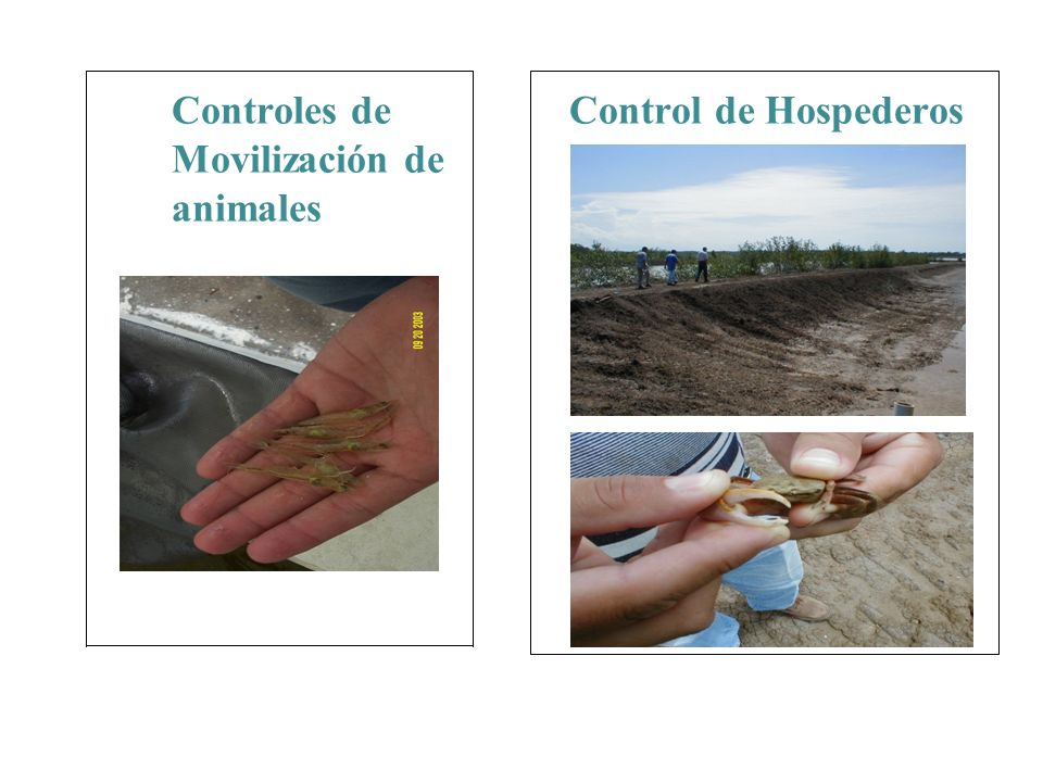 Controles de Movilización de animales