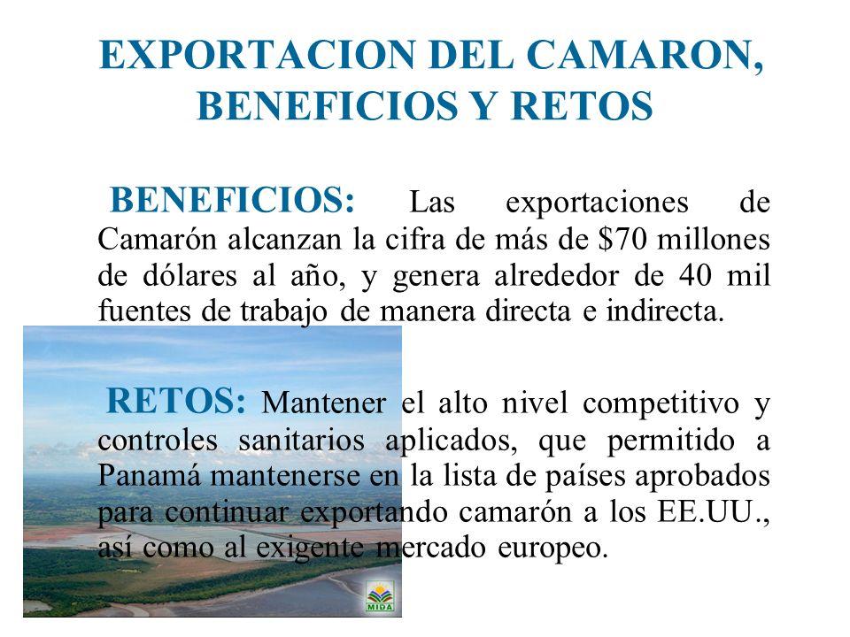 EXPORTACION DEL CAMARON, BENEFICIOS Y RETOS