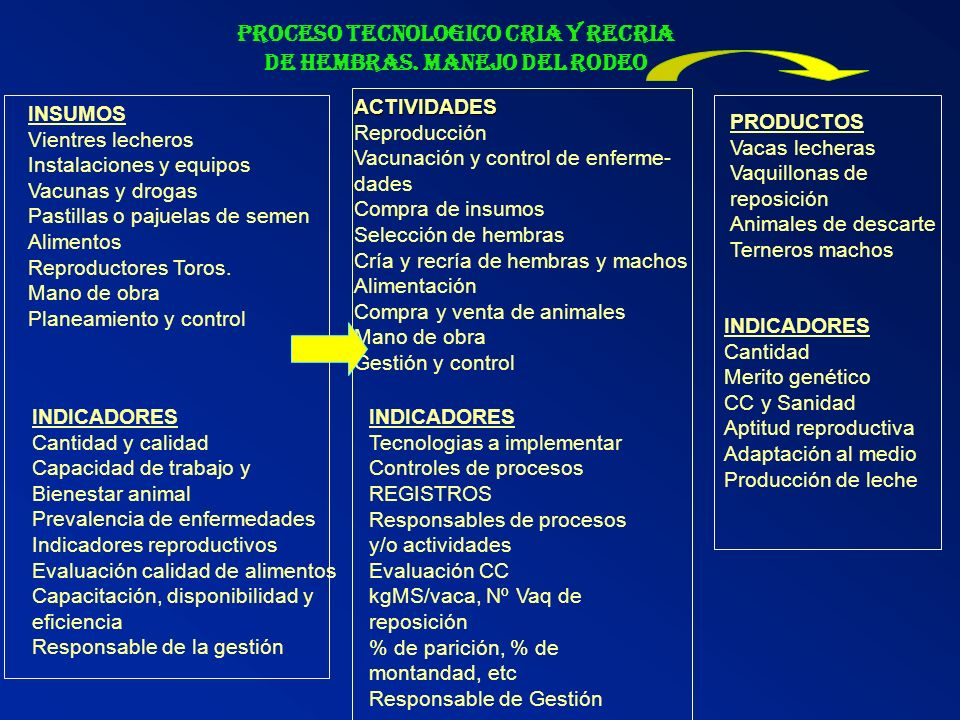 PROCESO TECNOLOGICO CRIA Y RECRIA DE HEMBRAS. MANEJO DEL RODEO