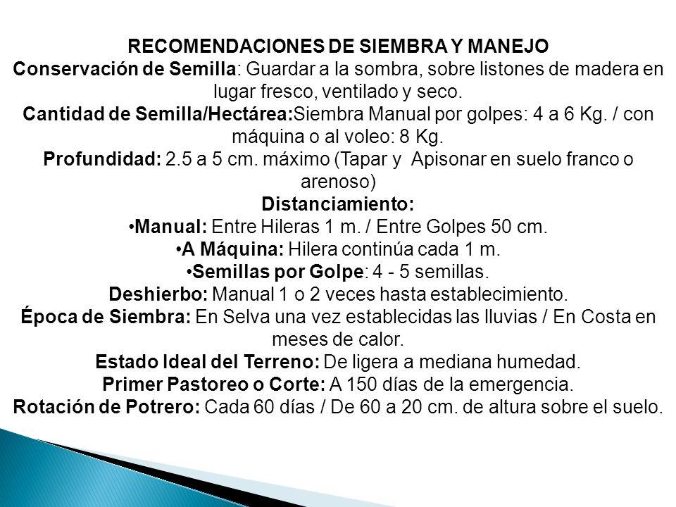 RECOMENDACIONES DE SIEMBRA Y MANEJO