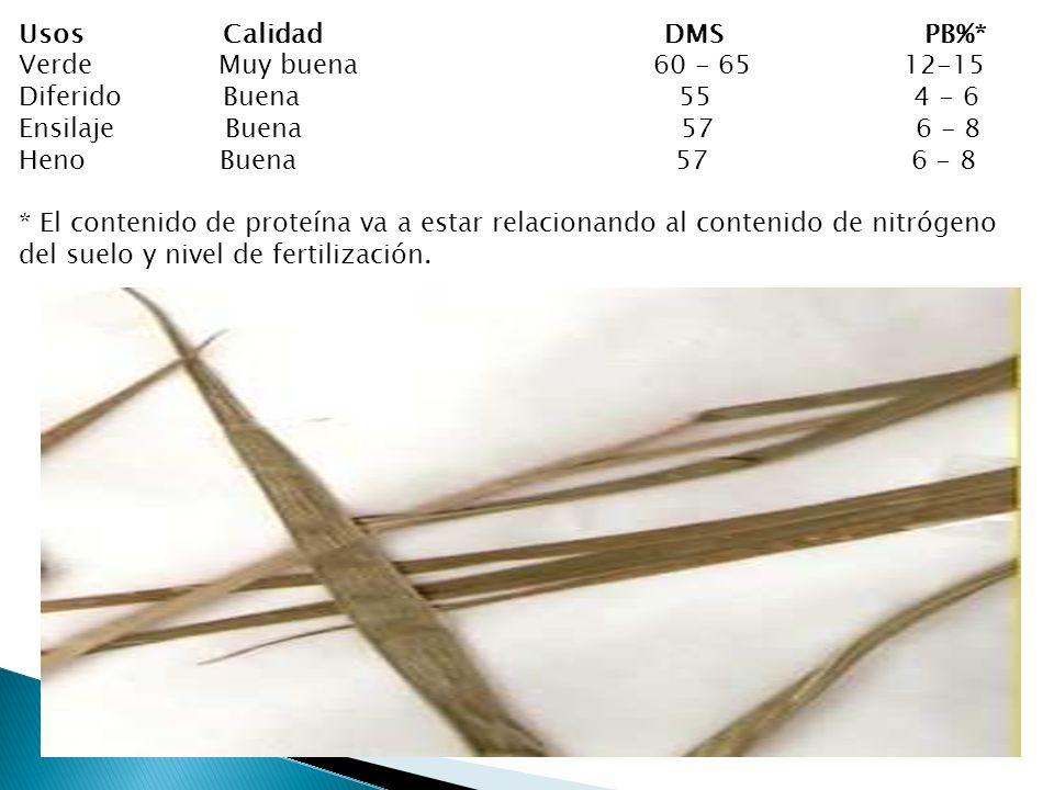 Usos Calidad DMS PB%*