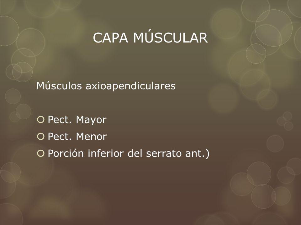 CAPA MÚSCULAR Músculos axioapendiculares Pect. Mayor Pect. Menor