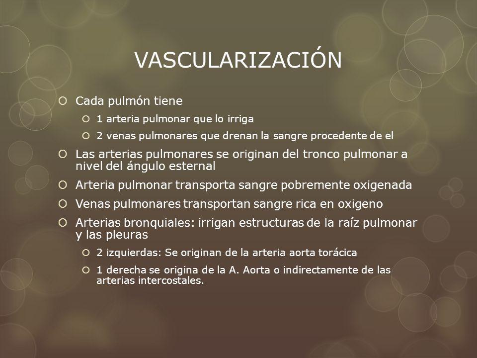 VASCULARIZACIÓN Cada pulmón tiene