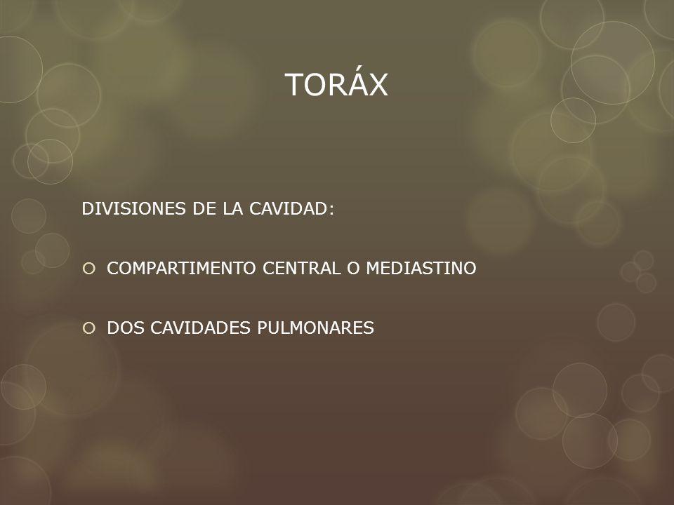 TORÁX DIVISIONES DE LA CAVIDAD: COMPARTIMENTO CENTRAL O MEDIASTINO