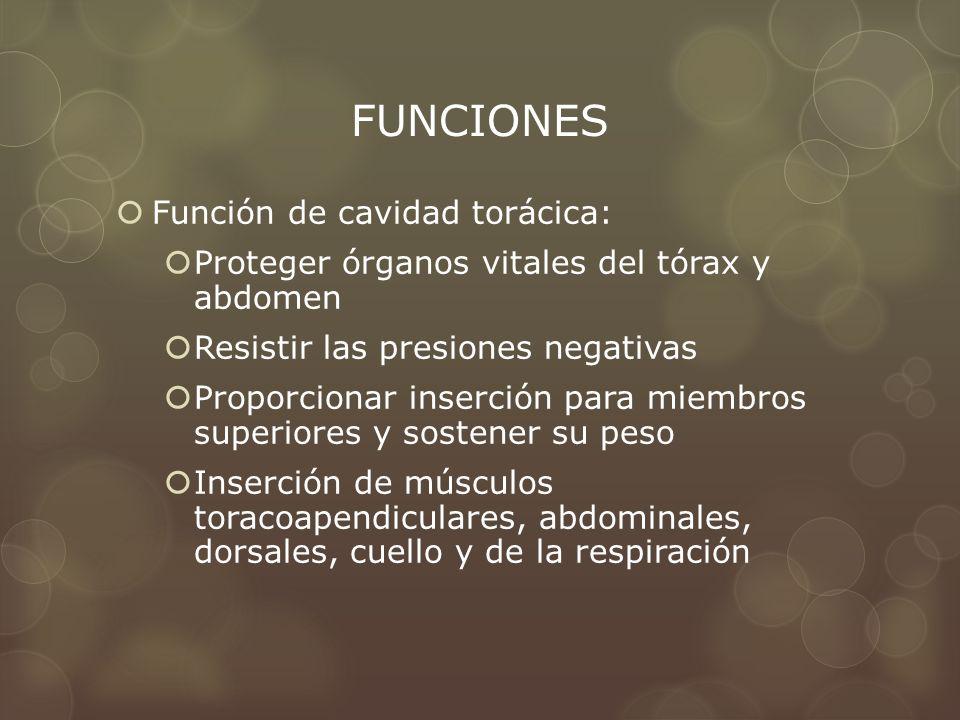 FUNCIONES Función de cavidad torácica: