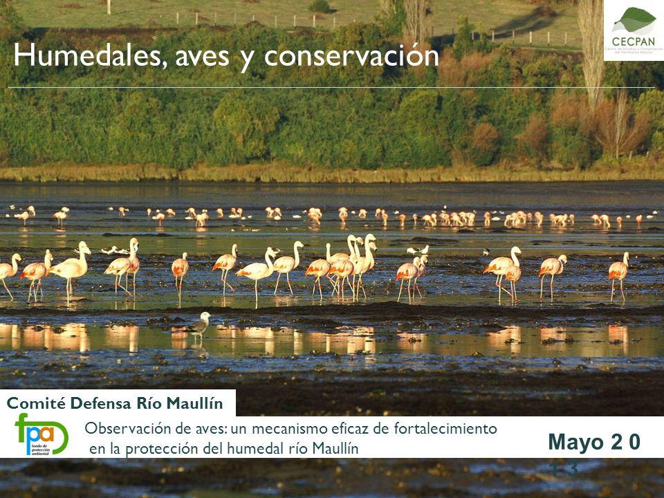 Humedales, aves y conservación