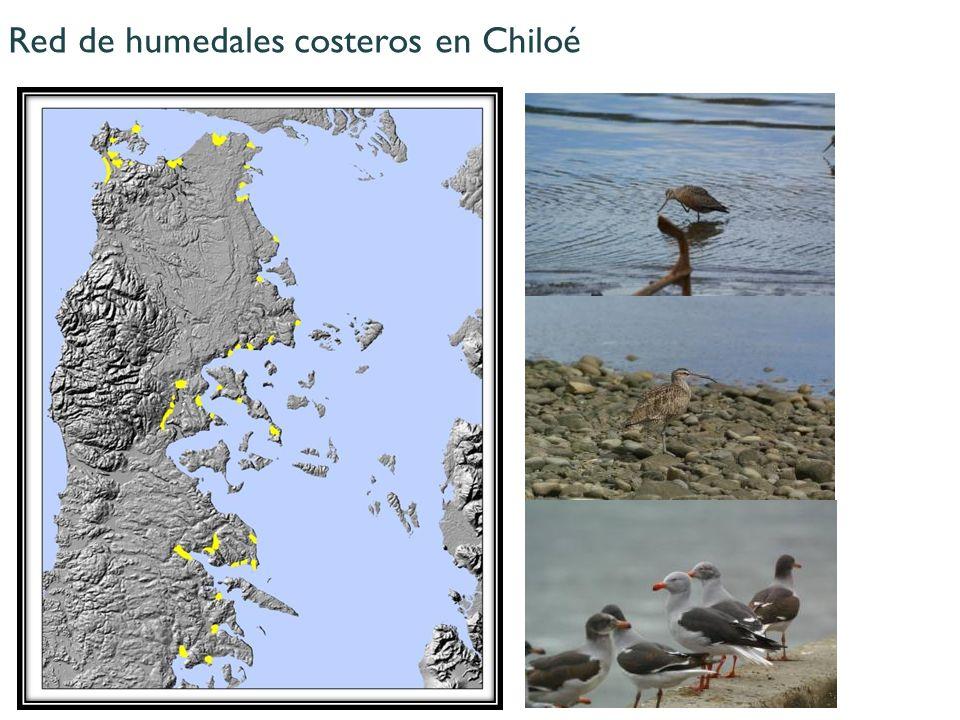 Red de humedales costeros en Chiloé