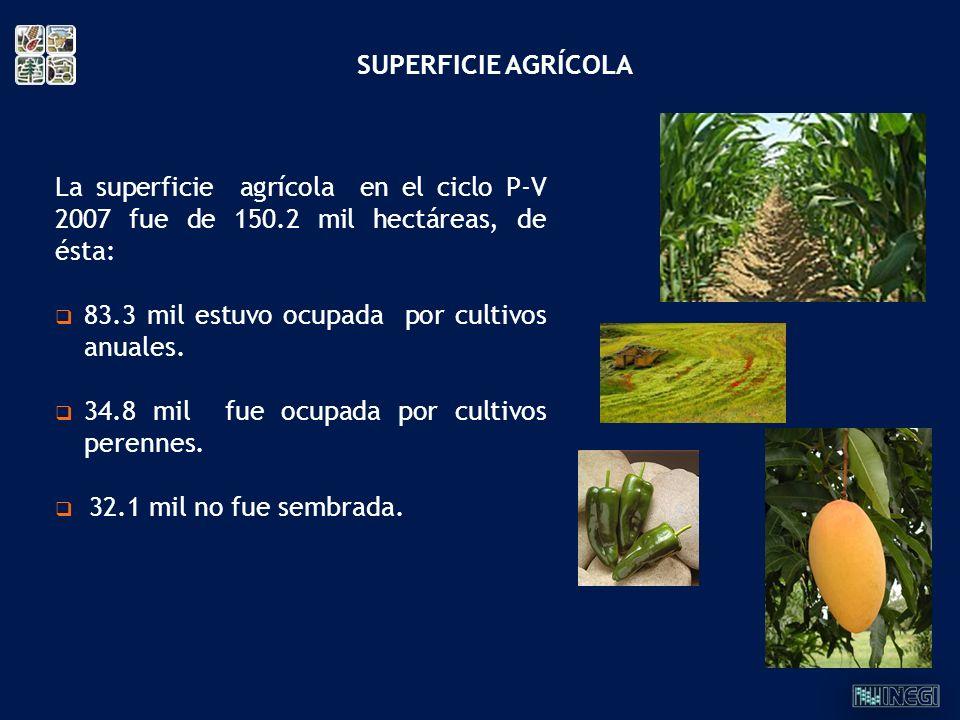 SUPERFICIE AGRÍCOLA La superficie agrícola en el ciclo P-V 2007 fue de 150.2 mil hectáreas, de ésta: