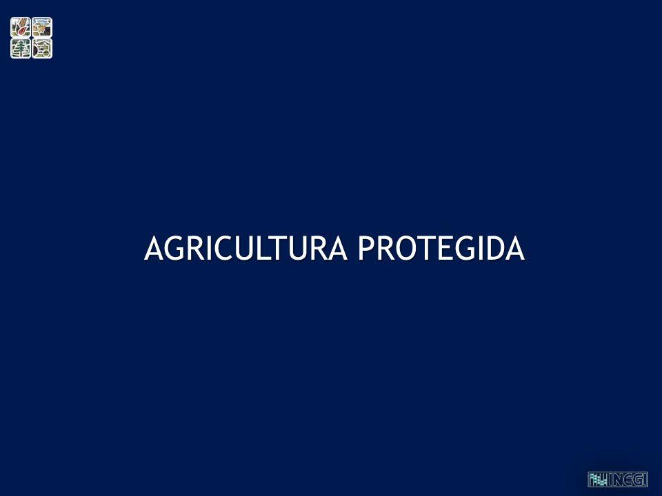 AGRICULTURA PROTEGIDA