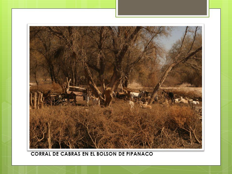 CORRAL DE CABRAS EN EL BOLSON DE PIPANACO