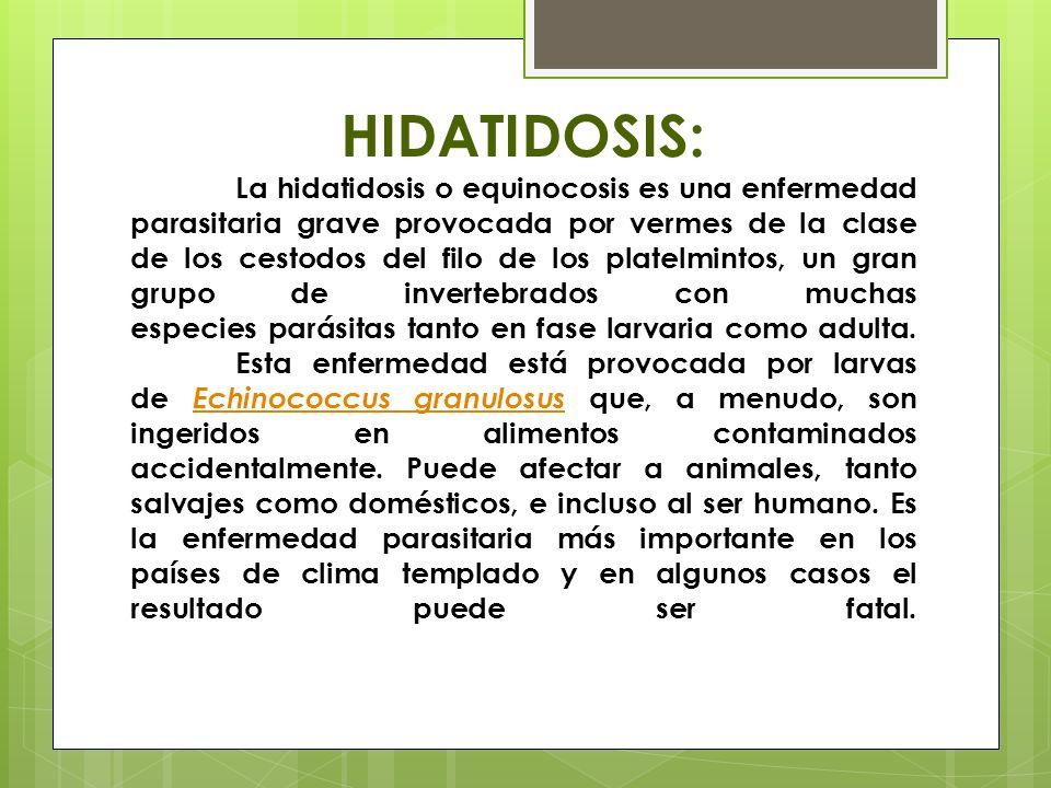 HIDATIDOSIS: La hidatidosis o equinocosis es una enfermedad parasitaria grave provocada por vermes de la clase de los cestodos del filo de los platelmintos, un gran grupo de invertebrados con muchas especies parásitas tanto en fase larvaria como adulta.