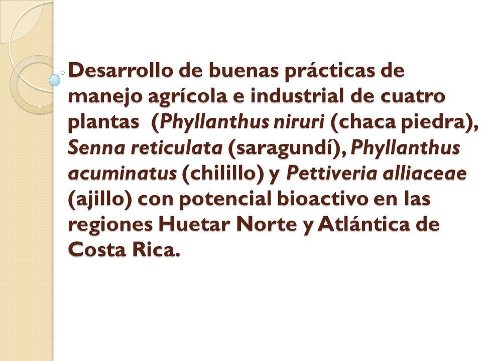 Desarrollo de buenas prácticas de manejo agrícola e industrial de cuatro plantas (Phyllanthus niruri (chaca piedra), Senna reticulata (saragundí), Phyllanthus acuminatus (chilillo) y Pettiveria alliaceae (ajillo) con potencial bioactivo en las regiones Huetar Norte y Atlántica de Costa Rica.