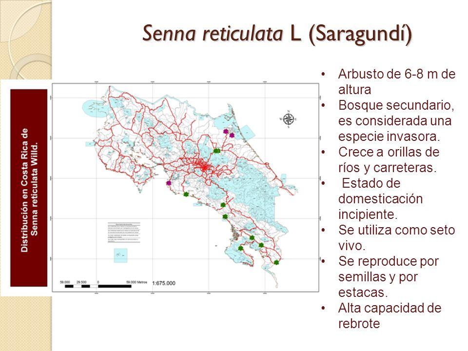 Senna reticulata L (Saragundí)