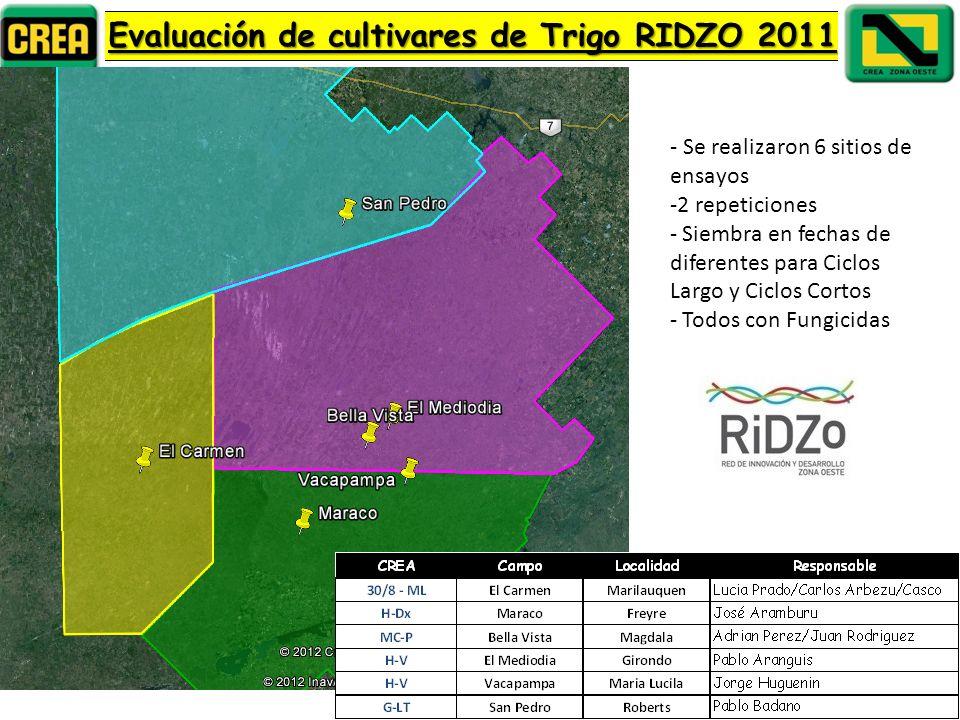 Evaluación de cultivares de Trigo RIDZO 2011