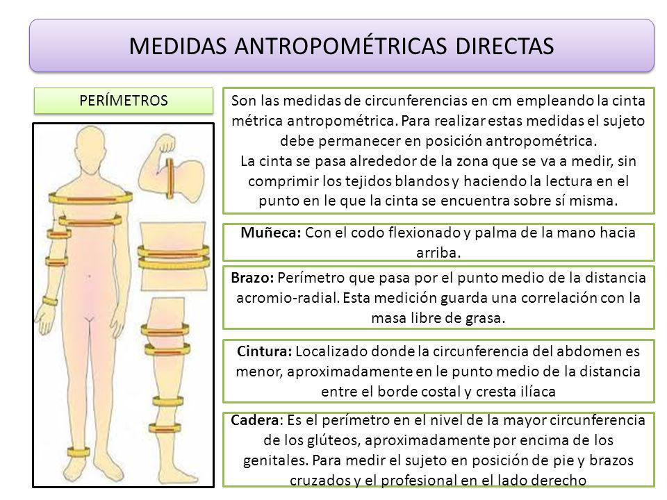 Taller te rico pr ctico ppt video online descargar for Cuales son medidas antropometricas