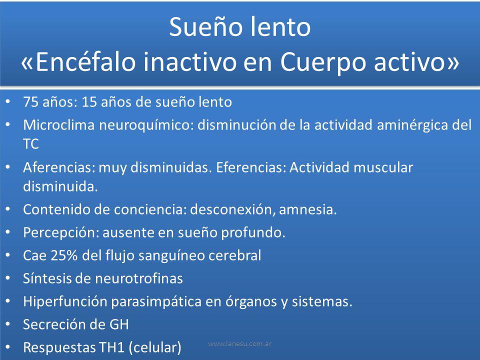 Sueño lento «Encéfalo inactivo en Cuerpo activo»