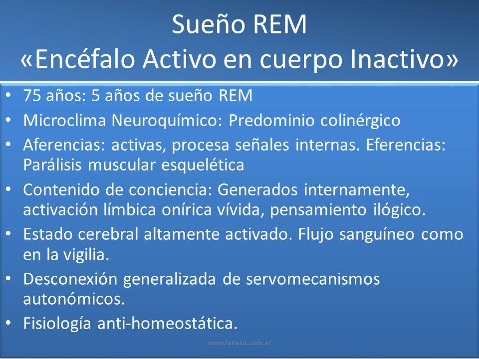Sueño REM «Encéfalo Activo en cuerpo Inactivo»