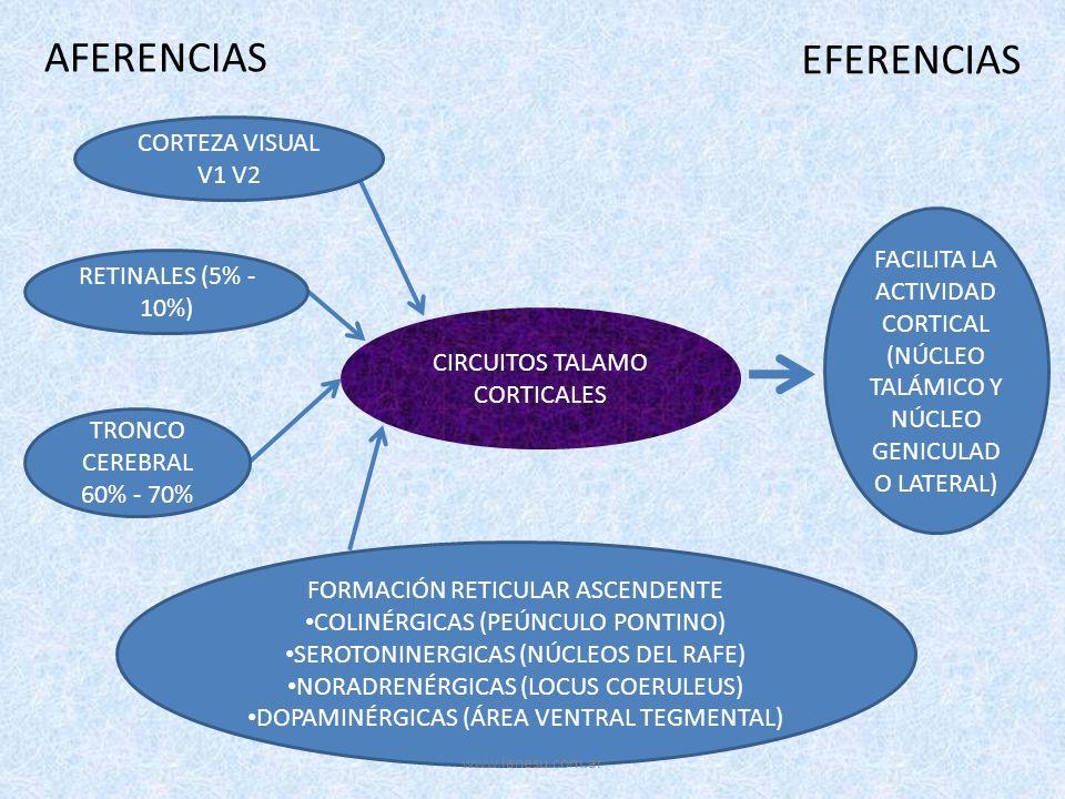 AFERENCIAS EFERENCIAS CORTEZA VISUAL V1 V2