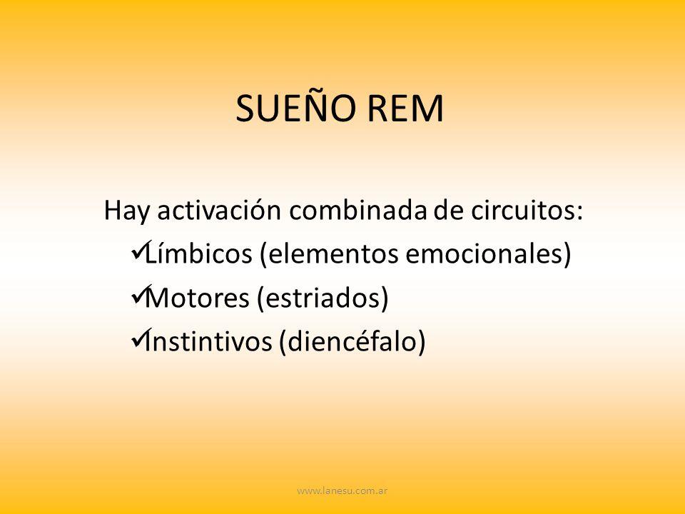 SUEÑO REM Hay activación combinada de circuitos: