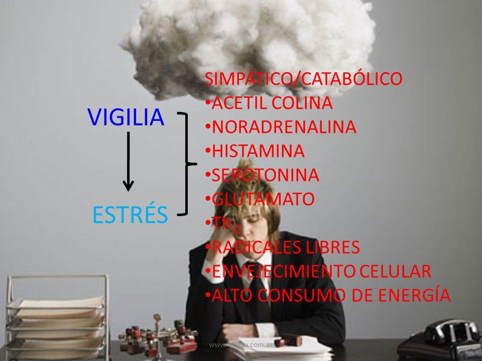 VIGILIA ESTRÉS SIMPÁTICO/CATABÓLICO ACETIL COLINA NORADRENALINA