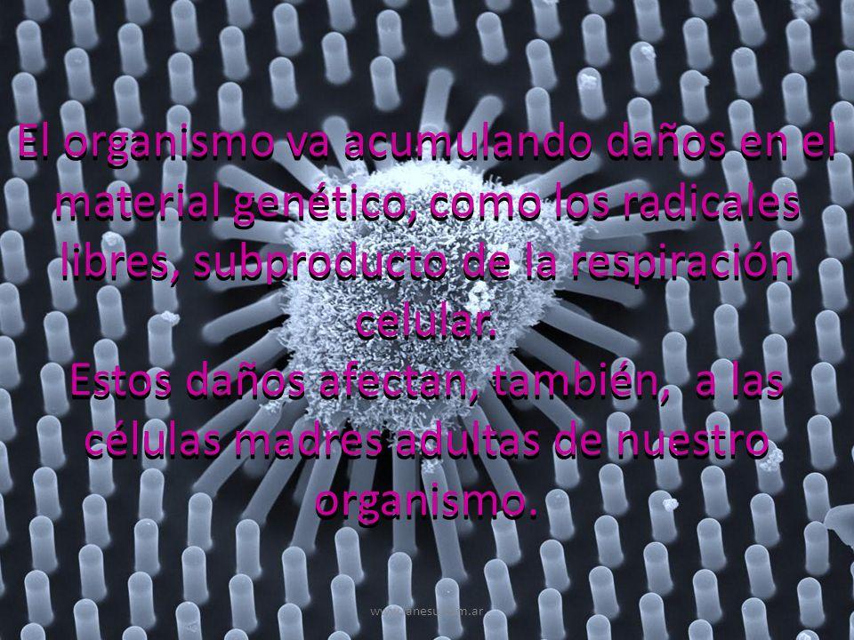 El organismo va acumulando daños en el material genético, como los radicales libres, subproducto de la respiración celular.