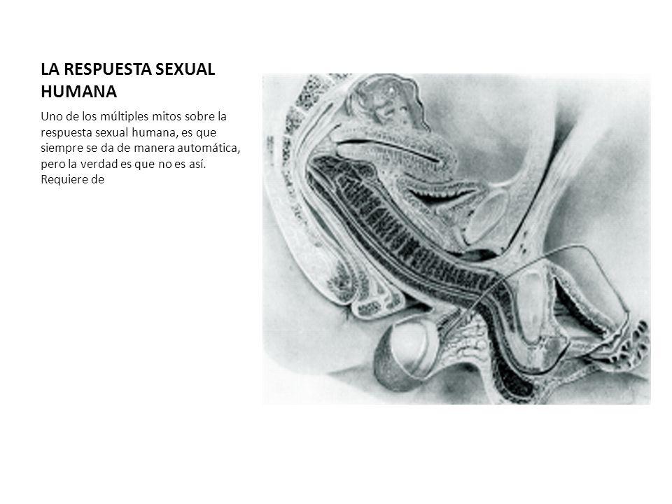 LA RESPUESTA SEXUAL HUMANA