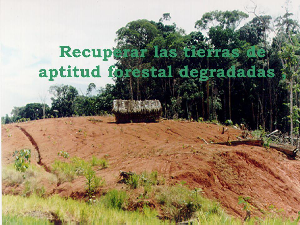 Recuperar las tierras de aptitud forestal degradadas ,