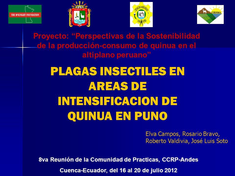 PLAGAS INSECTILES EN AREAS DE INTENSIFICACION DE QUINUA EN PUNO