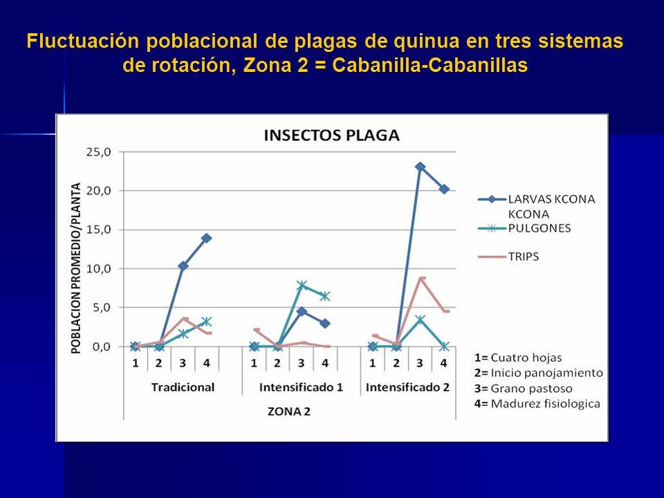 Fluctuación poblacional de plagas de quinua en tres sistemas de rotación, Zona 2 = Cabanilla-Cabanillas