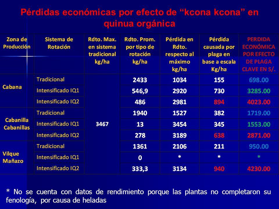 Pérdidas económicas por efecto de kcona kcona en quinua orgánica